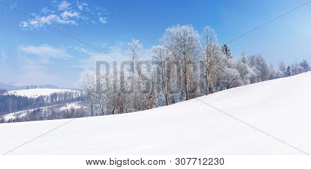 Panorama Of A Beautiful Winter Landscape. Forest On The Edge Of A Snow Covered Meadow. Trees In Hoar