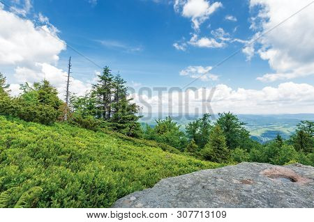 View From The Grassy Hill In To The Valley. Clouds On The Blue Sky. Tall Spruce Trees On The Meadow