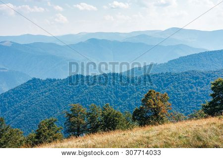 Beautiful View On To The Distant Mountain Ridge. Beech Trees Below A Meadow In Weathered Grass. Wond