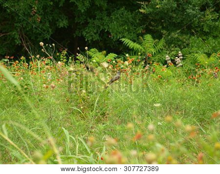 Song Birds Do Not Have To Sing For Their Meals In This Meadow. The Meadow Offers Up A Tasty Lunch Fo
