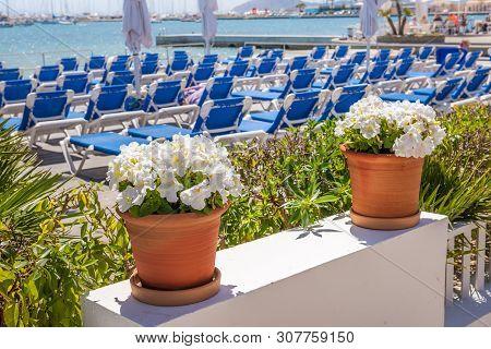 Flowers With Pots On The Beachfront Promenade In The Port De Pollenca (puerto Pollensa), A Popular F