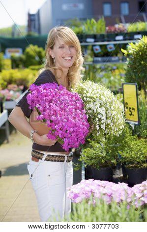 Buying Summer Plants