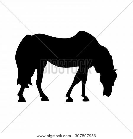 Grazing Horse Silhouette Isolated On White Background. Wild Horse