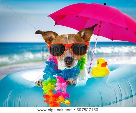 Jack Russel Dog Resting And Relaxing On A Air Mattress Or Swim Ring   At The Beach Ocean Shore, On S