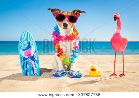 Jack Russell Dog At The Beach With A Surfboard Wearing Sunglasses And Flower Chain At The Ocean Shor