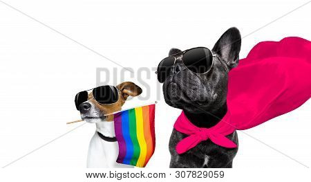 Fairy  Funny Gay French Bulldog  Dog Proud Of Human Rights Waving  With Lgbt Rainbow Flag And Sungla