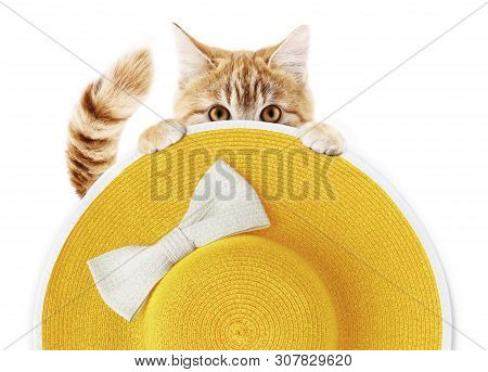 Ginger Funny Cat With Summer Beach Round Straw Yellow Hat With White Bow Isolated On White Backgroun