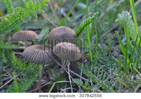 View Of Autumn Mushrooms, Southern Bohemia, Czech Republic