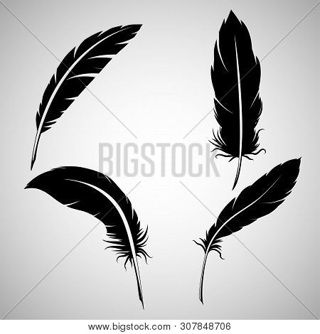 Black Feathers, On White Background. Feathers On A White Background, Black Feathers