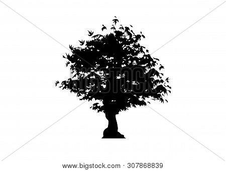 Vector Silhouette Maple Tree Icon Isolated On White Background. Acer Palmatum, Deshojo, Japanese Map