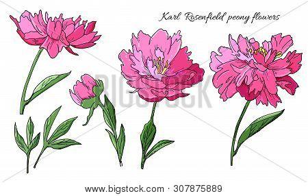 Detailed Hand Drawn Flowers Set - Karl Rosenfield Blooming Peonies, Leaves And Flower Buds.