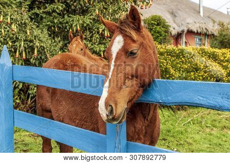 Horse Standing Behind A Blue Fence In A Field
