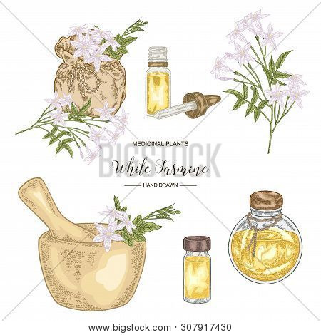 Collection Of White Jasmine, Jasminum Officinale Flowers And Leaves. Medical Plants Hand Drawn. Vect