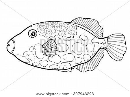 Triggerfish Fish Clown, Line Silhouette Cartoon Hand Drawn Sea Animal, Contour Maritime Character, C