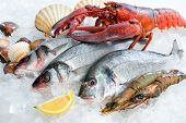 Fresh catch of fish and other seafood on ice poster