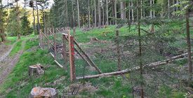 The Enclosure Protects New Trees, Reforestation, South Bohemia, Czech Republic