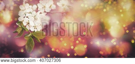 Spring Blossom Background. Beautiful Nature Scene With Tender White Flowers Blooming Tree In Sunny D