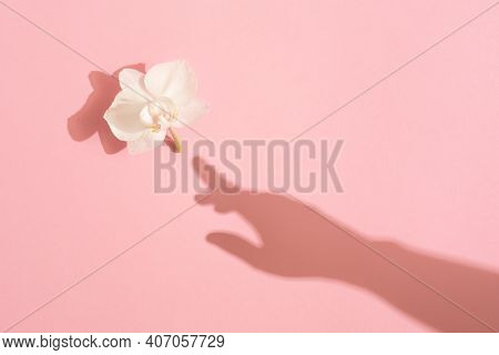 Shadow Of Female Hand Touches A White Orchid Flower On Pink Background. Femininity Concept. Womens,