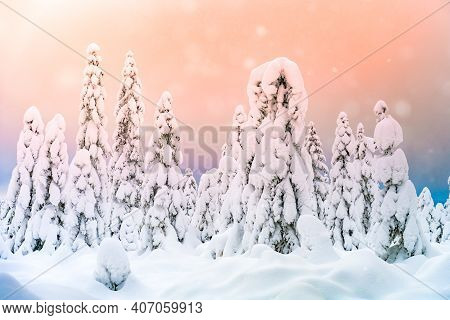 Fairytale Winter Forest Landscape With Lot Of Snow And Falling Snowflakes. Christmas Nordic Wonderla