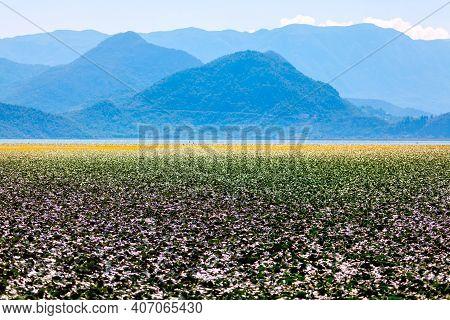 Wetland And Mountains Scenery . Nature Of Lake Skadar