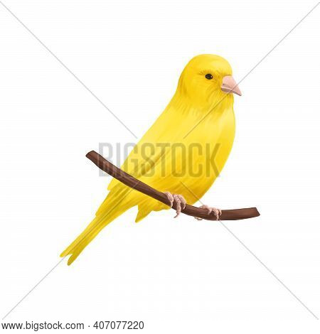 Drawing Bird, Yellow Canary, Hand Drawn Songbird, Isolated Nature Design Element