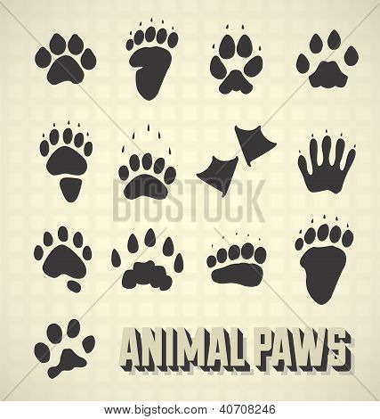 Paw Prints of Wild and Domestic Animals