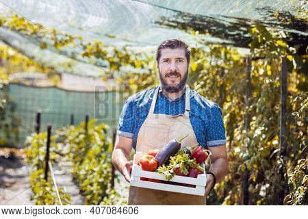 Man Harvesting Fresh Vegetables From His Bio Farm - Happy Male Farmer Wearing Apron Holding Box With
