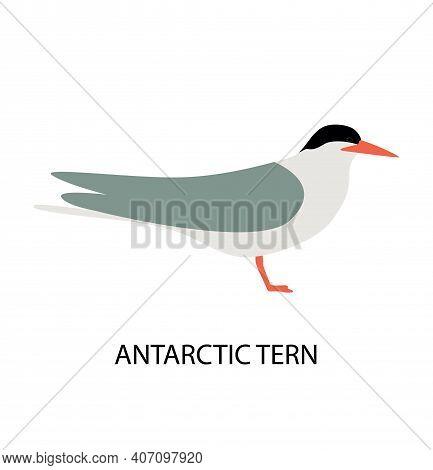 Illustration With Antarctic Tern. Cute Cartoon Character. Antarctic Bird.