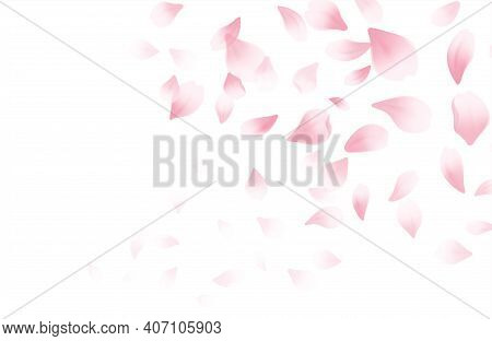 Spring Time Beautiful Background With Spring Blooming Cherry Blossoms. Sakura Flying Petals Isolated
