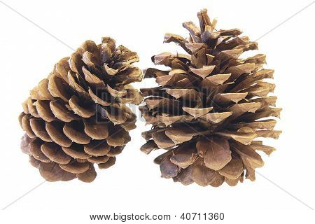 Two Pine Cones Closeup