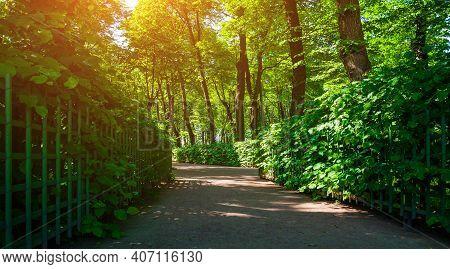 Summer sunny park landscape - summer city park with metal fences and deciduous green summer trees, summer sunny landscape, summer nature view, summer park