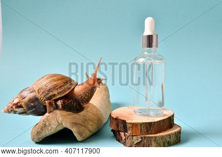 Shot Of A Cosmetic Serum With Extract Of Snail Slime And A Snails On A Wood. Snail Mucus Extract.