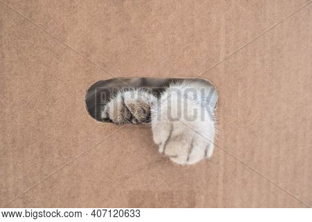 Funny Cute Cat In A Cardboard Box. The Cat Is Playing In A Cardboard Box. Fluffy Paws Of A Cat In Th