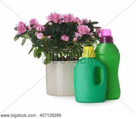 Azalea In Pot And Different Houseplant Fertilizers On White Background