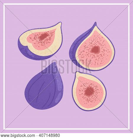 Set Of Ripe Figs. Sweet Figs, Whole And Half Sliced Fruit Vector Hand Drawn Illustration On Violet B