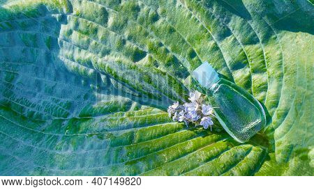 A Bottle Of Perfume Or Scented Oil On A Large Green Leaf Of A Plant In Dewdrops And Blue Flowers