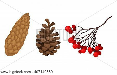 Ashberry Branch And Brown Pine Or Fir Cone With Spirally Arranged Scales Vector Set