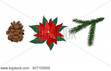 Poinsettia Flower, Fir Cone And Tree Needle Branch Vector Set