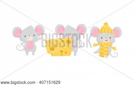Cute Mouse Wearing Warm Hat And Eating Cheese Slab Vector Set