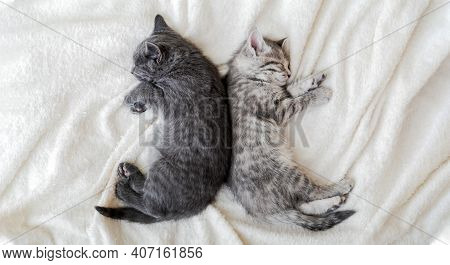 Two Cute Tabby Kittens Sleeping On White Soft Blanket In Yin Yang Shape. Cats Rest Napping On Bed. B
