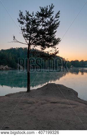 Lonely Coniferous Tree By The Lake. Coniferous Tree And Birise Lake. Vertical Frame.