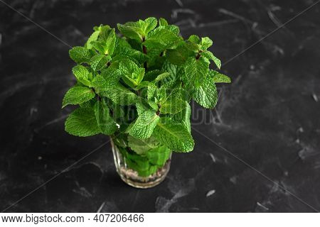 Fresh Bunch Of Mint In A Glass On A Black Grunge Background. Selective Focus. Mint Leaves