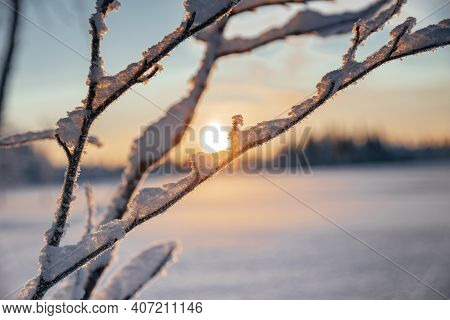 Spring Sunset In The Winter Tundra Through The Willow Branches. In The Background, The Sun Sets Belo