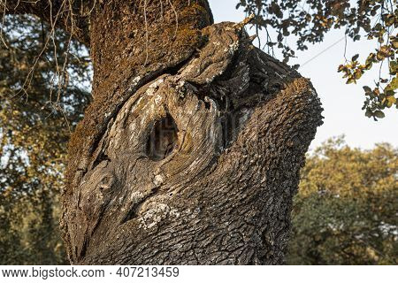 A Tree Trunk With A Deep Cleft