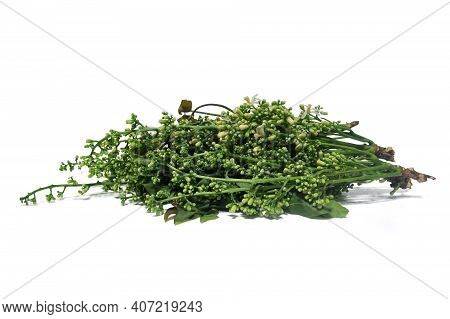 Neem Flower Illustration On White Background With Clipping Path.
