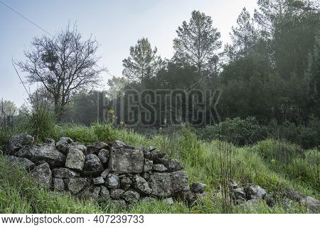 A Hazy Forest Scenery With An Ancient Agriculture Terrace, In The Judea Mountains Near Jerusalem, Is