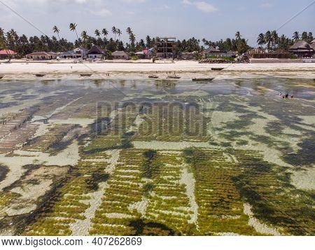 Aerial Shot Of Underwater Seagrass Sea Weed Plantation. Jambiani, Zanzibar, Tanzania.