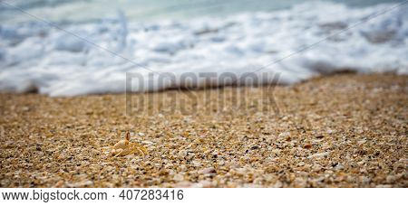 Small Shells On The Beach Sand . View Of Beach Covered With Different Sea Shells. Selective Focus. M