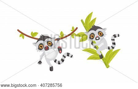 Cute Lemur As Primate With Long Striped Tail Swinging On Liana Vector Set