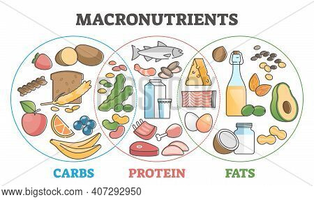 Macronutrients Educational Diet With Carbs, Protein And Fats Outline Concept
